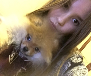 pomeranian, puppy, and sweet image