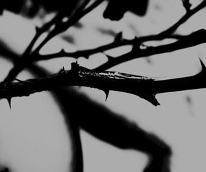 thorns image
