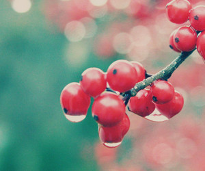 red, berries, and fruit image