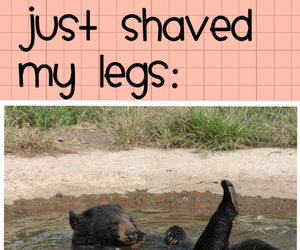 bear, fabulous, and funny image