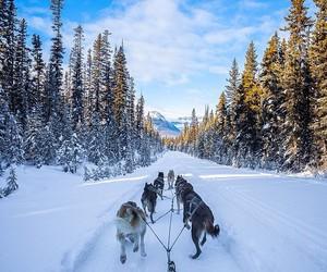 dog, husky, and mountains image