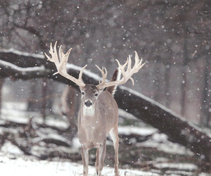 christmas, beautiful, and deer image