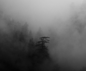 fog and pale image