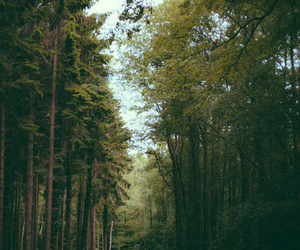 forest, photography, and trees image