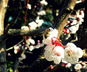apricot, spring, and bee image