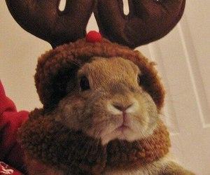cute, bunny, and christmas image