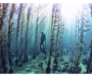 beautiful, kelp forest, and scuba diving image