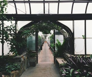 greenhouse, plants, and white image