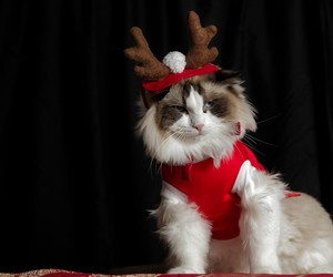 cats, christmas, and december image