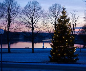 christmas tree, decorations, and winter image