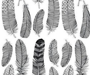 wallpaper and feathers image