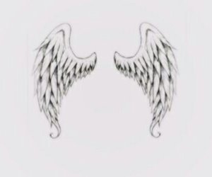 wings and header image