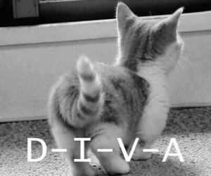 diva and cat image