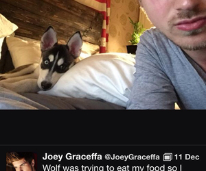 joey graceffa, joey graceffa a's dog, and joey graceffa's dog image