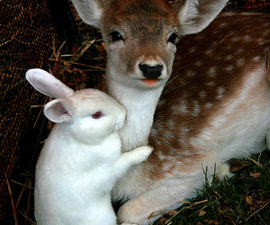 animal, deer, and bunny image