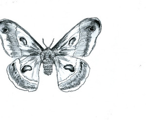 drawing, pretty, and moth image