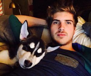husky, puppy, and wolf image