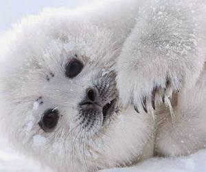 cute animals, seal, and sealife image