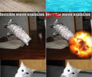 cat, funny cat, and lol image