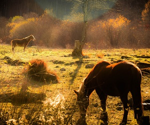 animals, horses, and light image