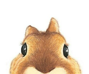cute, squirrel, and rabbit image