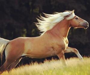 horse, beautiful, and haflinger image