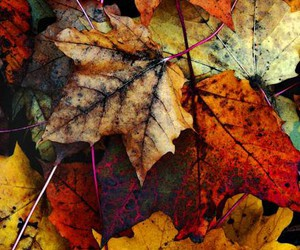 leafs, nature, and photography image