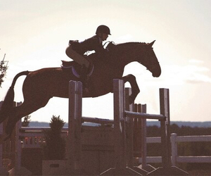 horse, first place, and ottb image