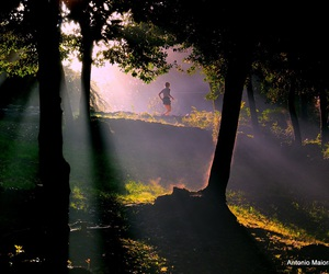 forest, light, and jogging image