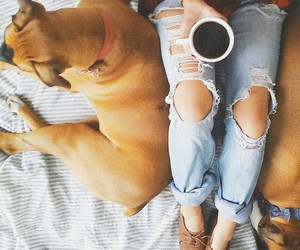 coffee, doggy, and cute image
