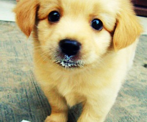 sweet and so cute! image