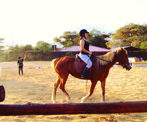equestrian, horse riding, and horseriding image