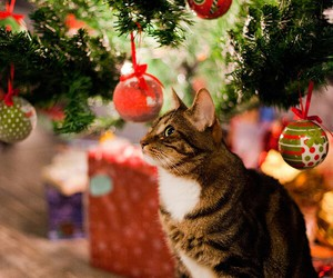 cat, christmas tree, and cute image