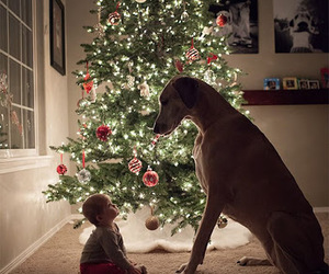 dog, christmas, and baby image