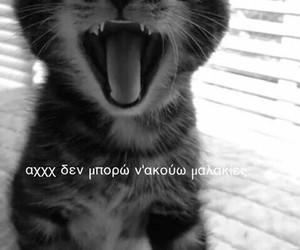 greek and kitten image