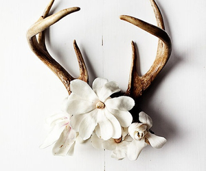 flowers, antlers, and white image