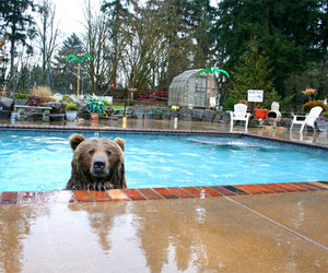 bear and pool image