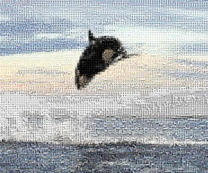 mosaic, whales, and tilearray image
