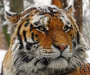 snow, animal, and eyes image