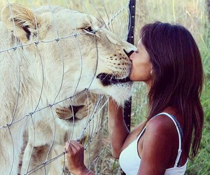lion, love, and kiss image