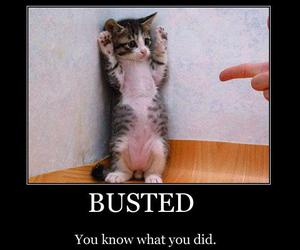 busted, cat, and kitty image