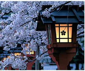 japan, flowers, and light image