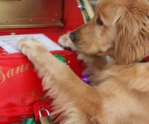 cute christmas dog image