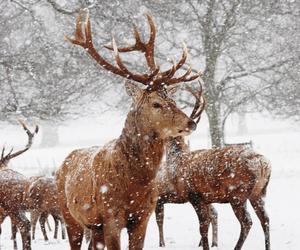 animal and snow image