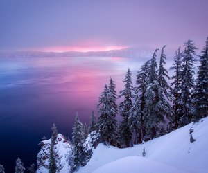 purple, beautiful, and pink image