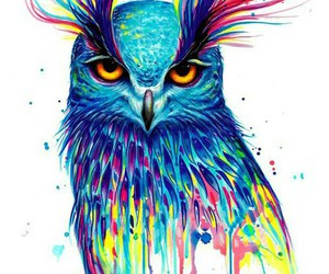 owl, art, and colorful image