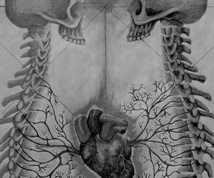heart, skeleton, and skull image