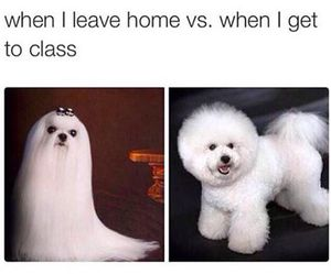 dog, funny, and hair image
