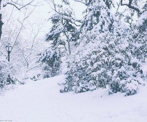 winter, snow, and adventure image