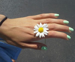 flowers, nails, and daisy image